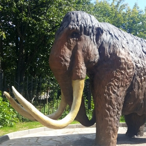 Mammoth (Mammuthus primigenius)
