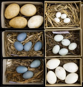 Bird egg and nest collections
