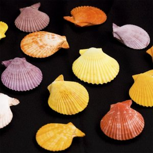 Mollusc collection