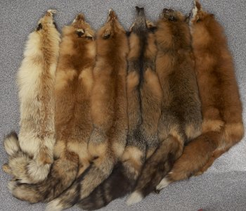 Mammals Skins Collection