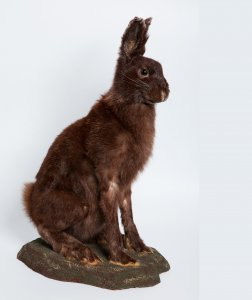 Taxidermied Mammals collection